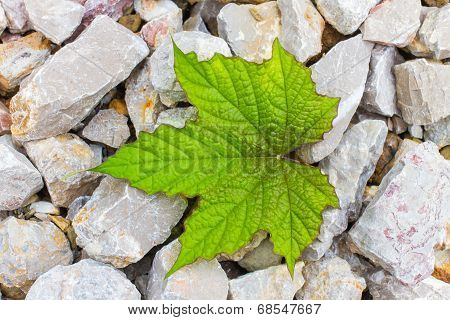 Stone And Leaf  - Background