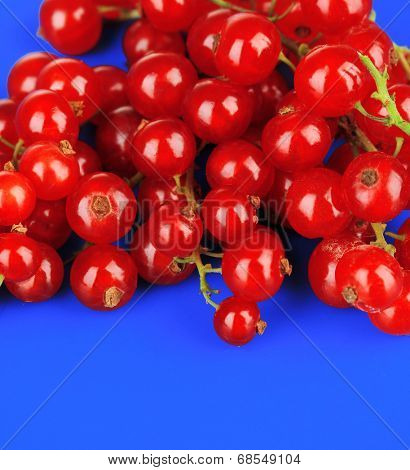 Redcurrants on blue background