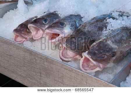 Fresh Pacific Cod