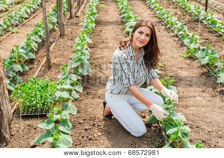 Woman working in greenhouse with cucumber plants.