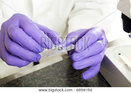 Preparing Slide Closeup