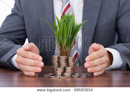 Businessman Protecting Saplings On Coin Stacks