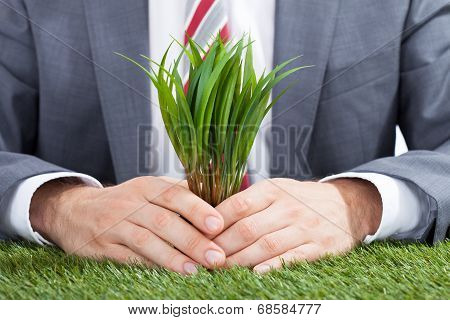 Businessman Holding Saplings On Meadow