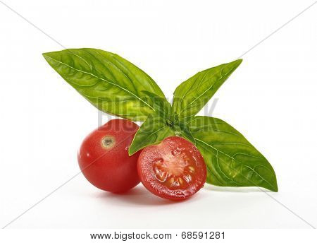 Tomatoes and basil leaves on a white background