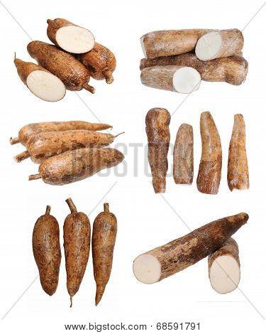 Manioc (cassava)