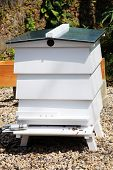stock photo of bee keeping  - Orchard beehive used for the commercial production of bee keeping honey - JPG