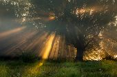 pic of sun god  - the Sun beams thorough trees and greens - JPG
