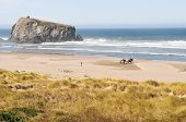 stock photo of cannon  - Two horses being photographed on Cannon Beach in Oregon - JPG