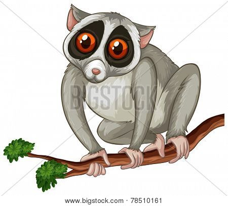 Illustration of a close up loris on a branch