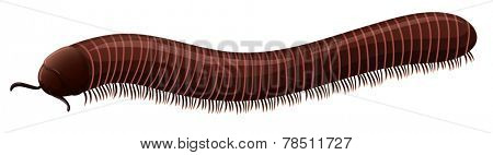 Illustration of a small millipede