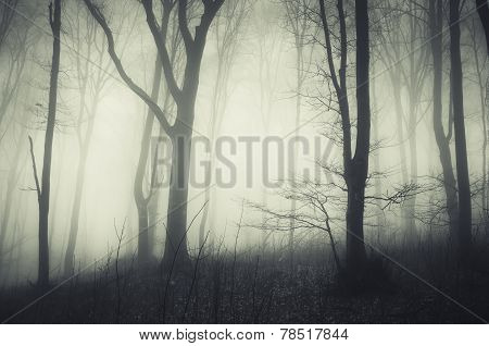 Dark enchanted scary woods with mysterious fog on Halloween