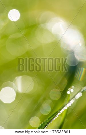 Defocused Nature Background With Green Grass
