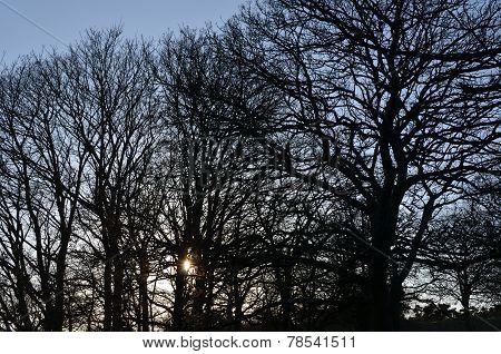 Sunset in English woodland.