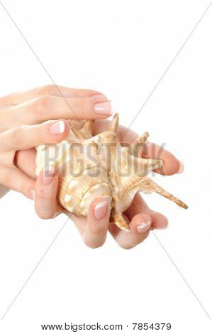 Beautiful Hand With Perfect French Manicure On Treated Nails Holding Sea Shell. Isolated On White Ba