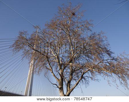 Tree over pylon