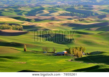 Farmland In Palouse Washington