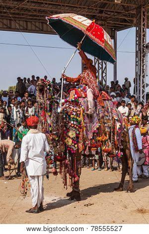 PUSHKAR, INDIA - NOVEMBER 22, 2012: Camel decoration competition contest at Pushkar Mela - annual five-day camel and livestock fair, one of the world's largest camel fairs and tourist attraction