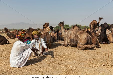 PUSHKAR, INDIA - NOVEMBER 21, 2012: Indian men and camels at Pushkar camel fair (Pushkar Mela) - annual five-day camel and livestock fair, one of the world's largest camel fairs and tourist attraction