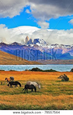 On the horizon, towering cliffs Torres del Paine.  Gray and black horse grazing in a meadow near the lake