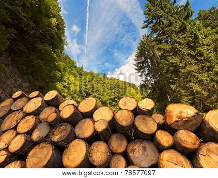Wooden Logs With Forest On Background