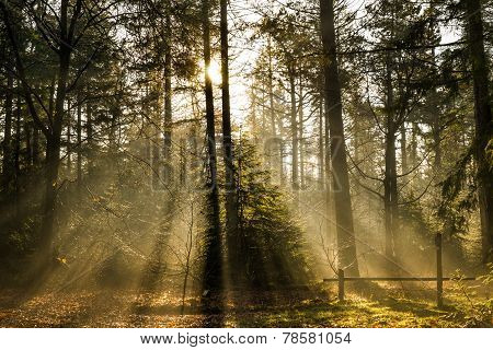 sun in a forrest