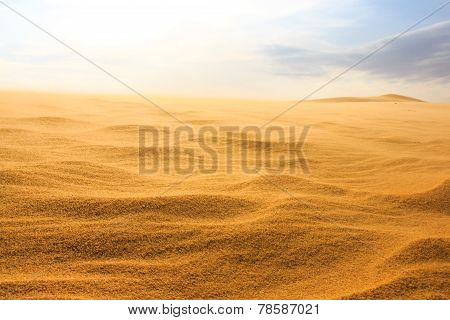 Wave On Desert