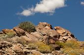 picture of anza  - Anza Borrego desert and state park with rocks and cactus - JPG