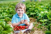 foto of strawberry blonde  - Happy little toddler boy on pick a berry farm picking strawberries in bucket outdoors - JPG