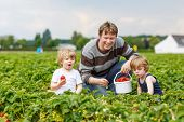 image of little kids  - Two little funny kid boys and their father on organic strawberry farm in summer picking and eating fresh ripe berries - JPG