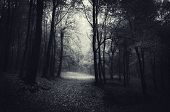 pic of mystery  - Dark path trough a mysterious forest  on Halloween - JPG