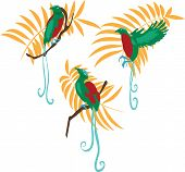 pic of bird paradise  - Bird of paradise vector illustration set for design - JPG