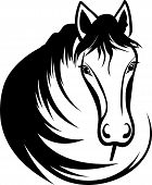 foto of horse face  - Head of horse with black mane - JPG
