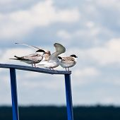 foto of flock seagulls  - Seagulls sitting on a parapet and looking out for fish - JPG