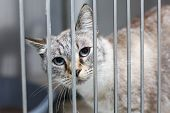 picture of caged  - Sad cat with big eyes in a cage - JPG
