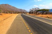 stock photo of baobab  - Road through the baobab forest valley in Tanzania on sunny day - JPG