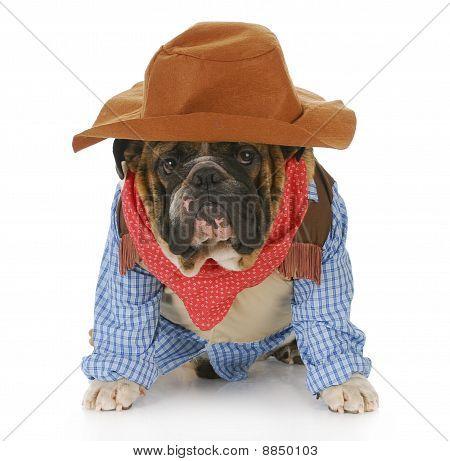 Perro disfrazado como un vaquero