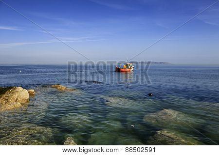 Seals Beside Rocks