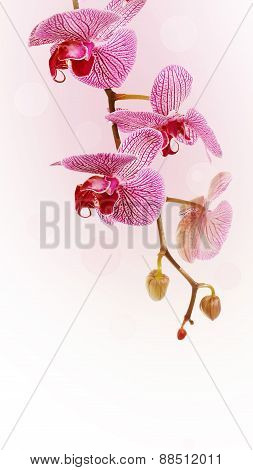 Branch With Flowers Of An Orchid Phalaenopsis.