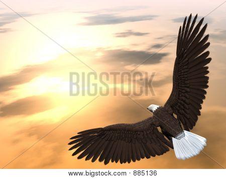 Eagleflying3