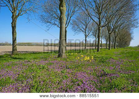 Purple wildflowers under trees in spring