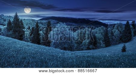 Meadow With Trees In Mountains At Night