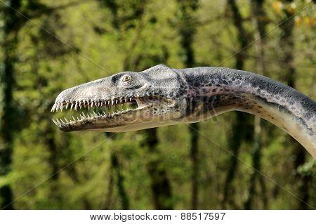 Close Up Of Plesiosaurus Model