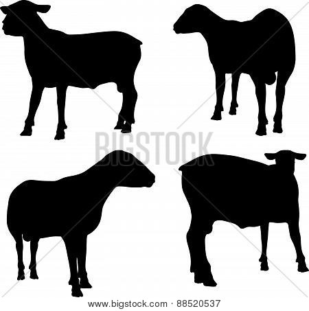 Sheep Silhouette With Standing Still Pose