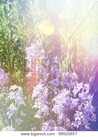 Bluebells with vintage effect