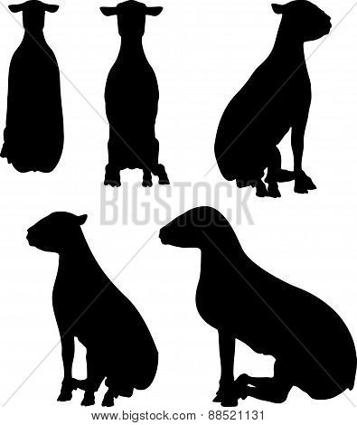 Sheep Silhouette With Sitting Pose