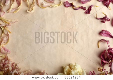 Dried flowers on sheet of paper background