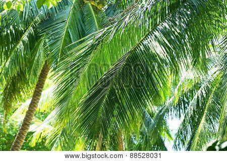 Beautiful green trees in resort