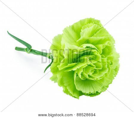 Green Carnation Isolated On White Background