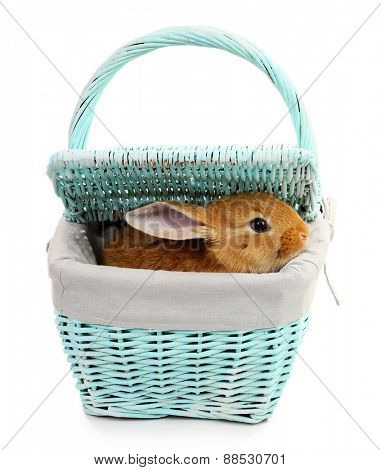 Cute brown rabbit in color wicker basket isolated on white