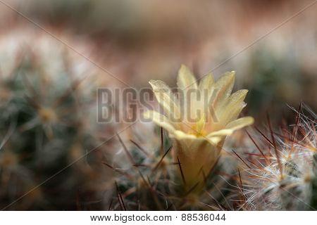 Cactus Flower Needles Background